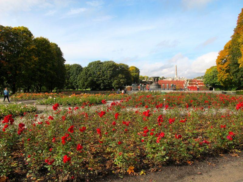 Roses in Vigelandsparken in Oslo, Norway