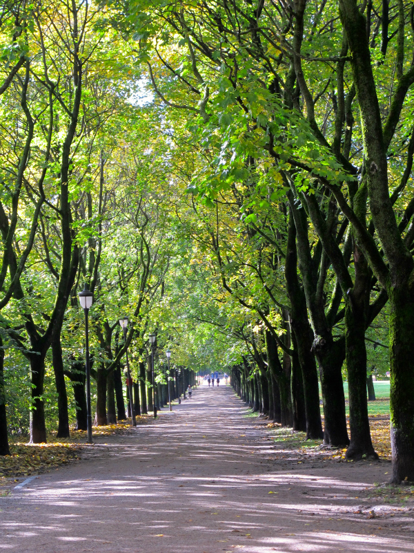 Tree-lined path in Vigelandsparken in Oslo, Norway
