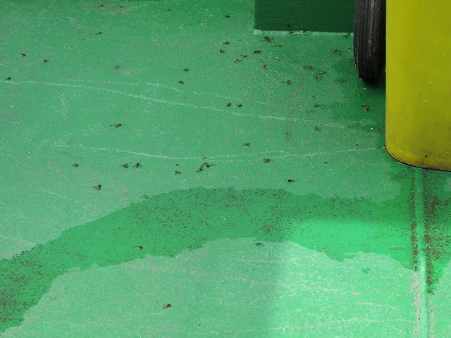 Dead bees on the ferry going to Smiltyne, Lithuania
