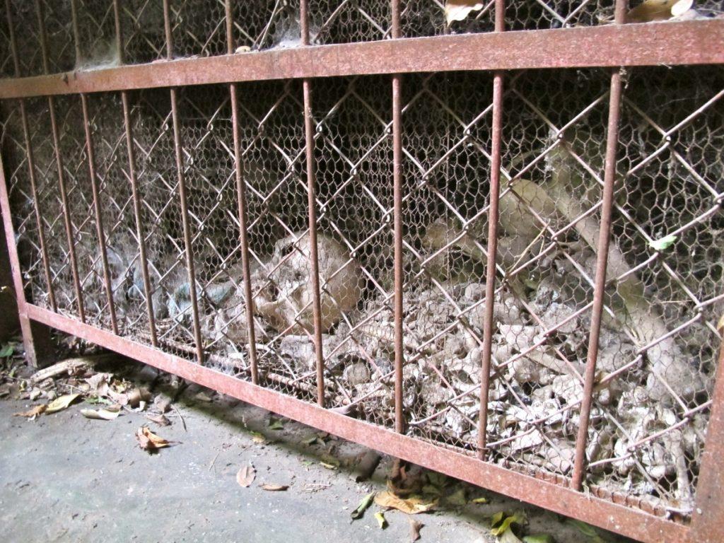 Human remains and skulls at Laang Lacaun, or the Killing Caves, in Battambang