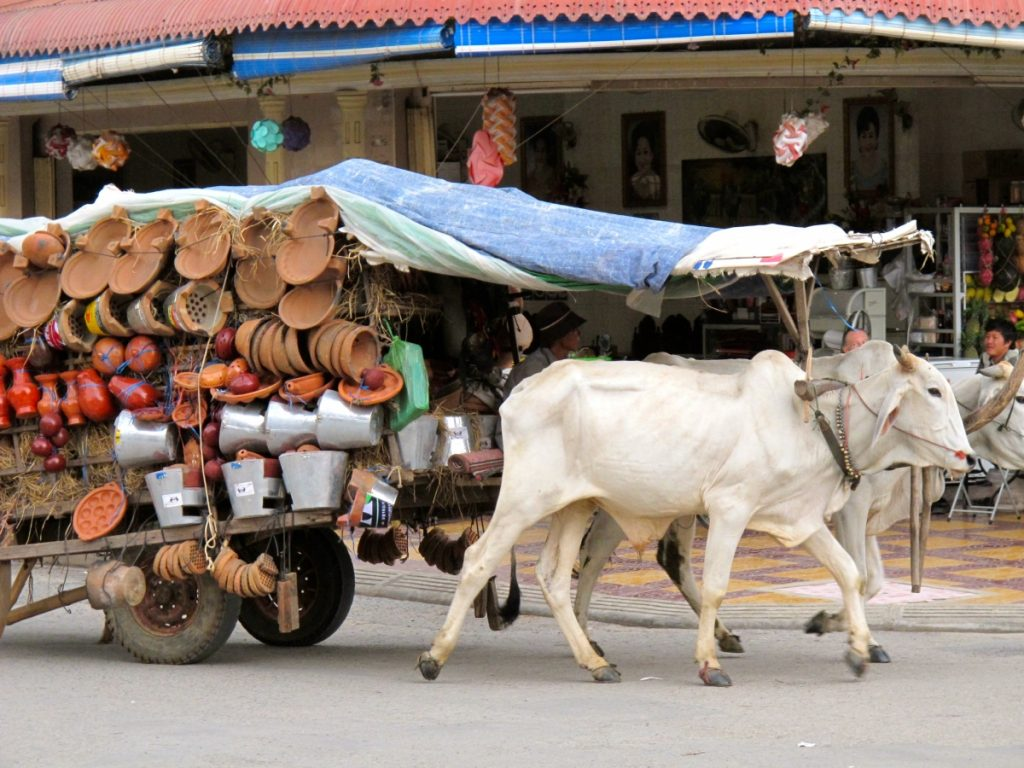 Powered by oxen in Battambang, Cambodia