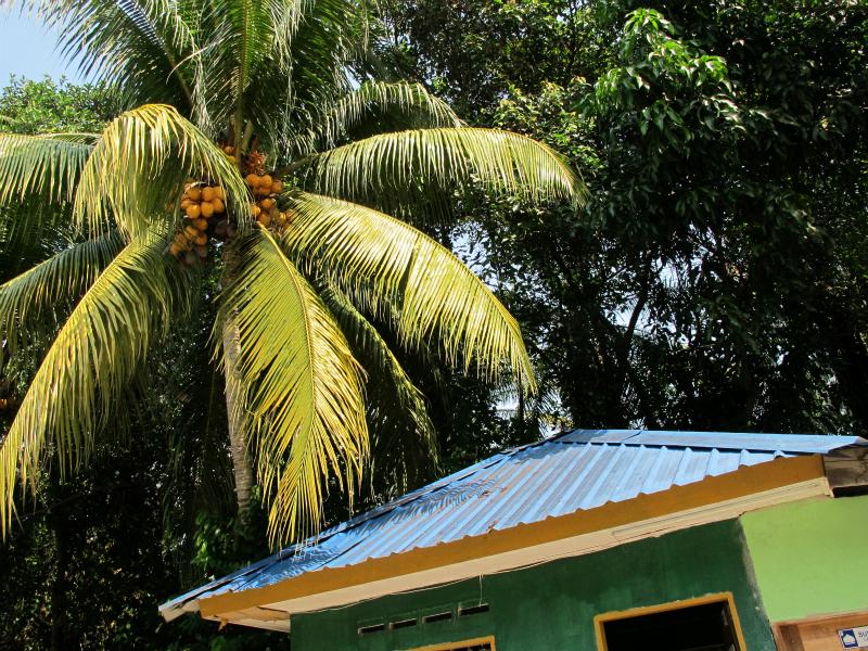 Coconut trees in Kuala Lumpur, Malaysia
