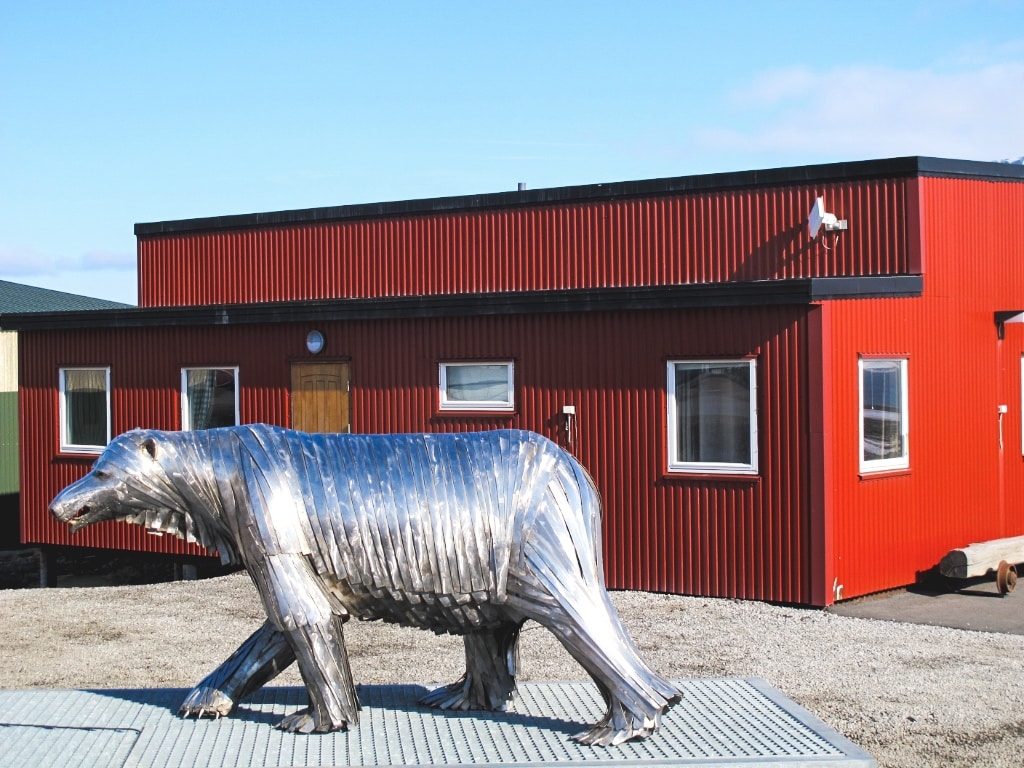Polar bear in Longyearbyen in Svalbard, Norway