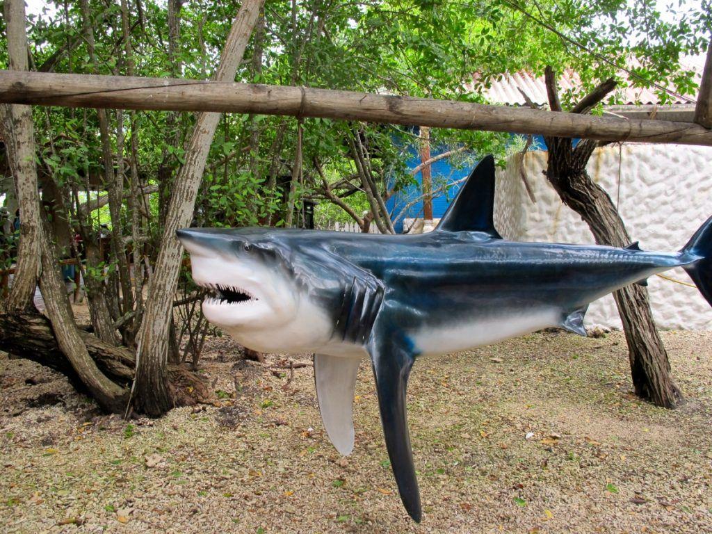 Fake shark in Isla San Martin de Pajarales, Colombia