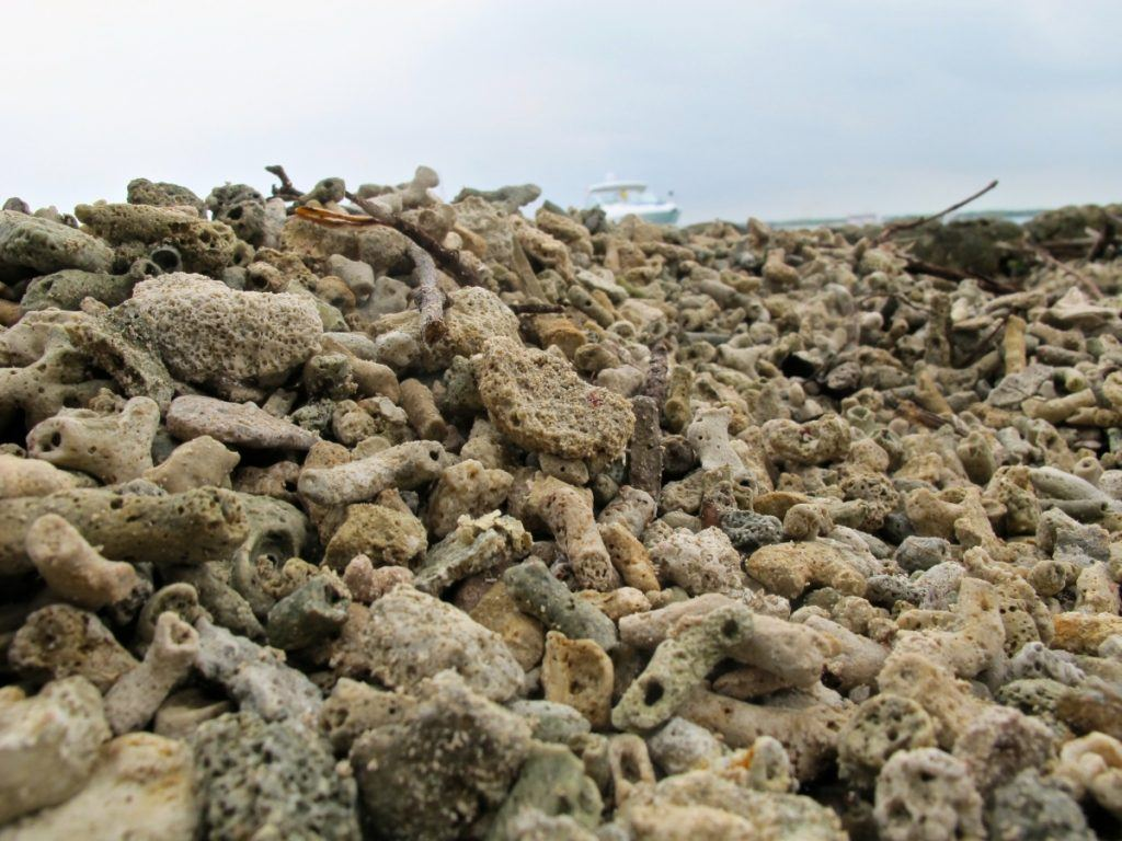 Coral in Isla San Martin de Pajarales, Colombia