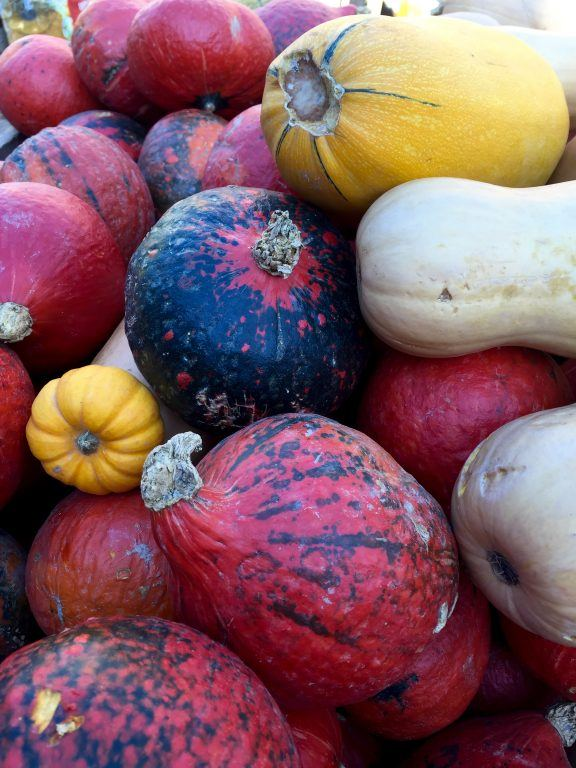 Autumn squash in Idstein, Germany