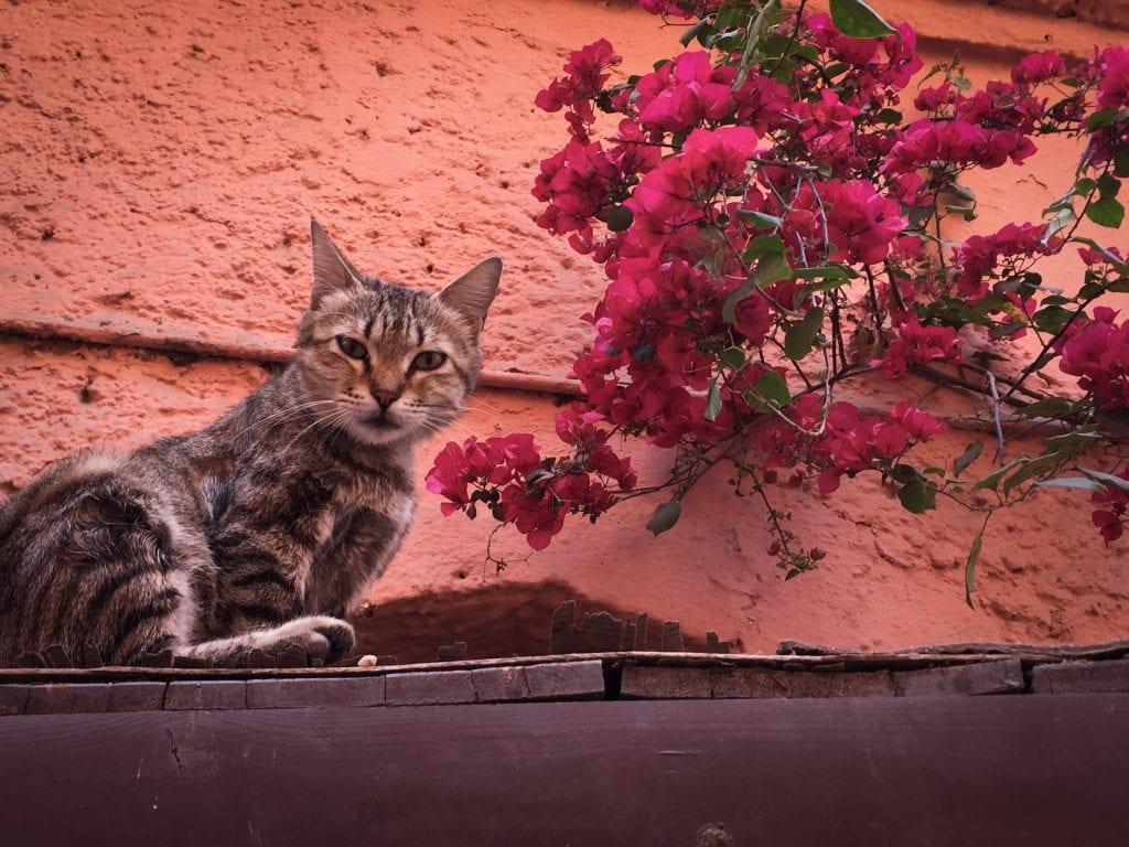 Cat in Marrakech, Morocco