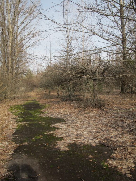 Visiting the Chernobyl Exclusion Zone; nature in Pripyat, Ukraine