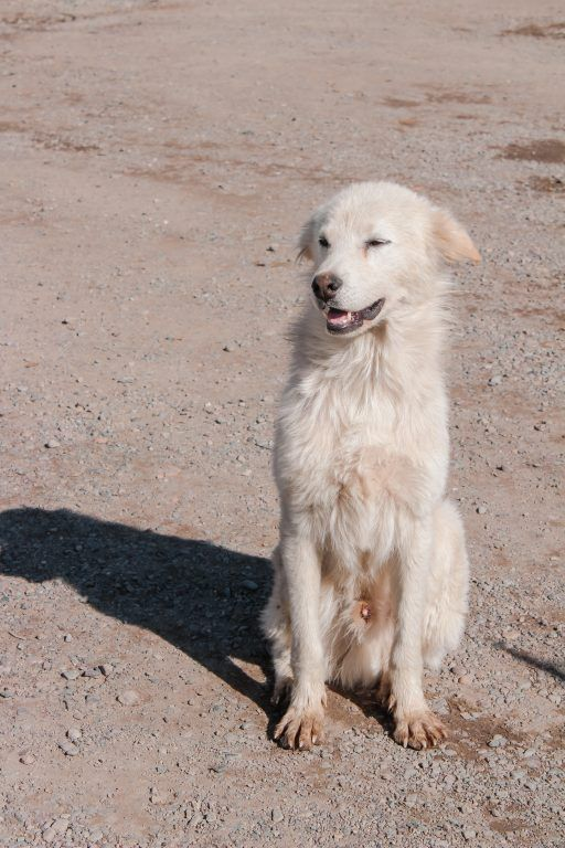 Dog in Kokpek in Kazakhstan