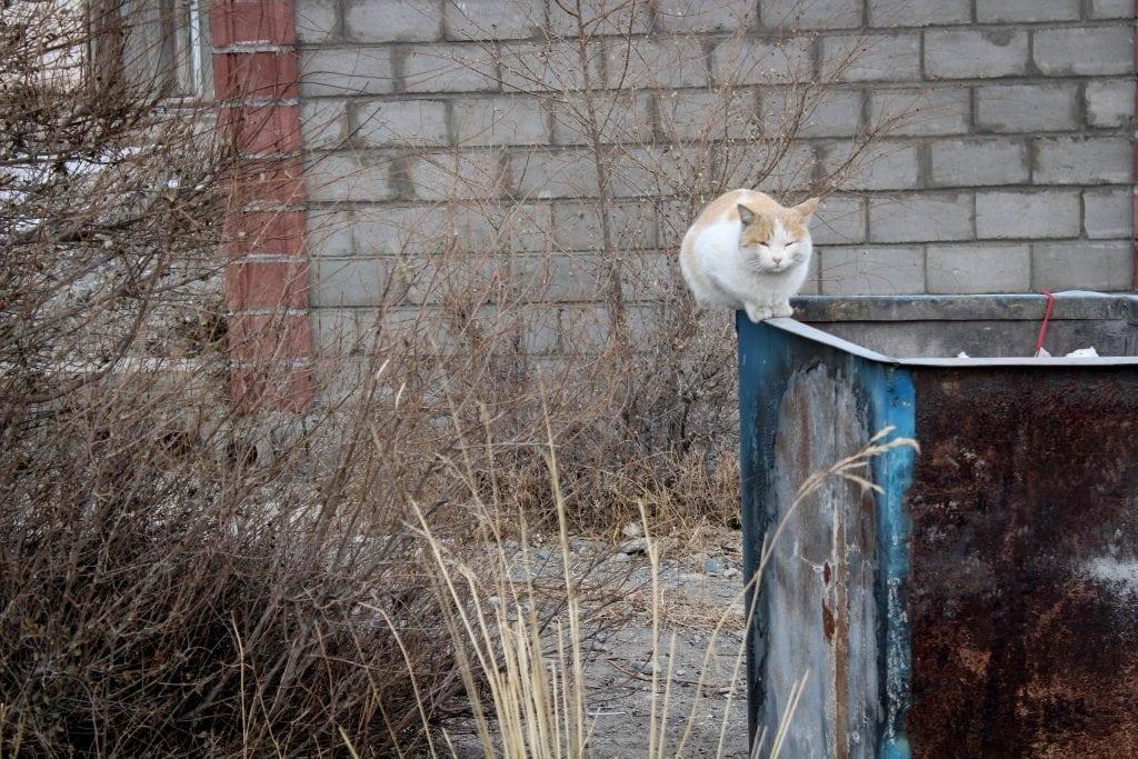 Cat in Balykchy, Kyrgyzstan