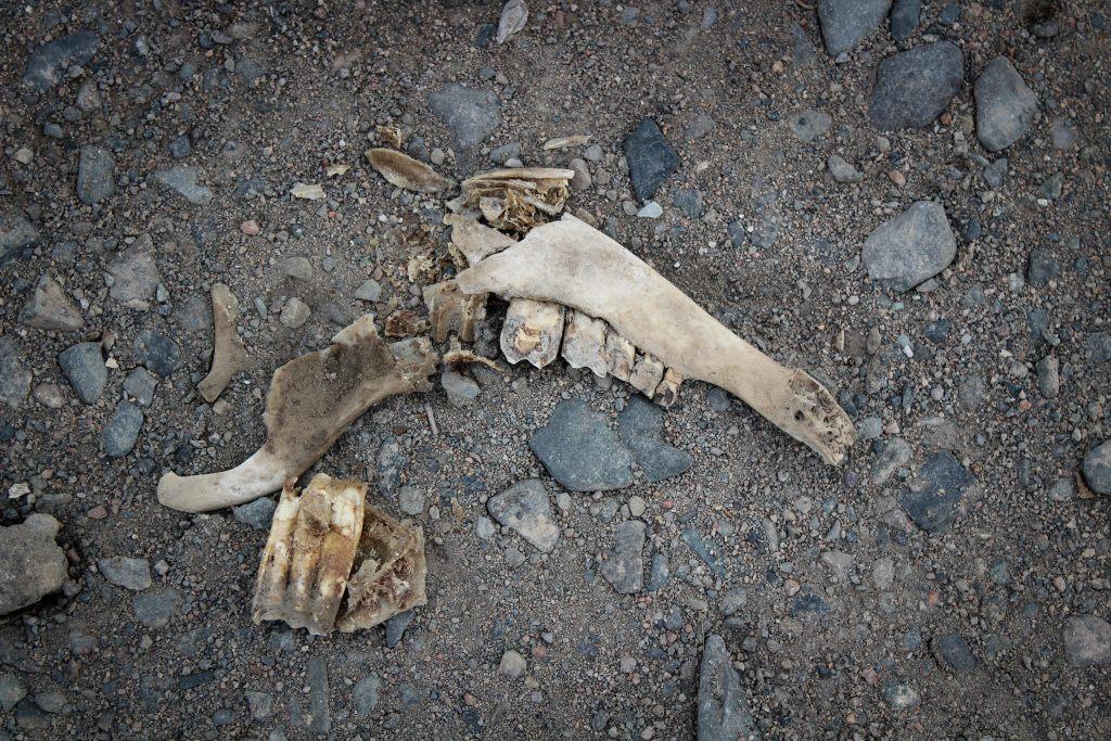 Random bones in Balykchy, Kyrgyzstan