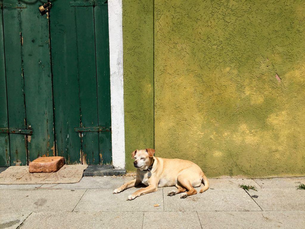 Dog in Burano, Italy