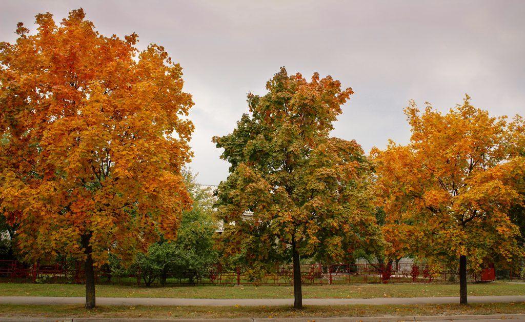 Autumn in Slavutych, Ukraine
