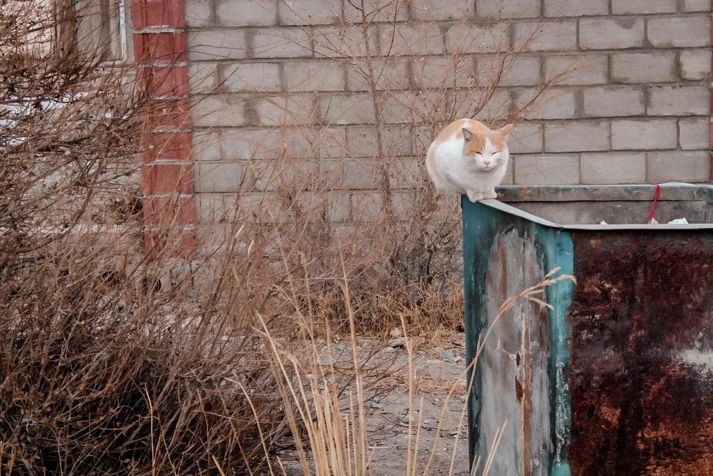balykchy, kyrgyzstan on issyk-kul cat