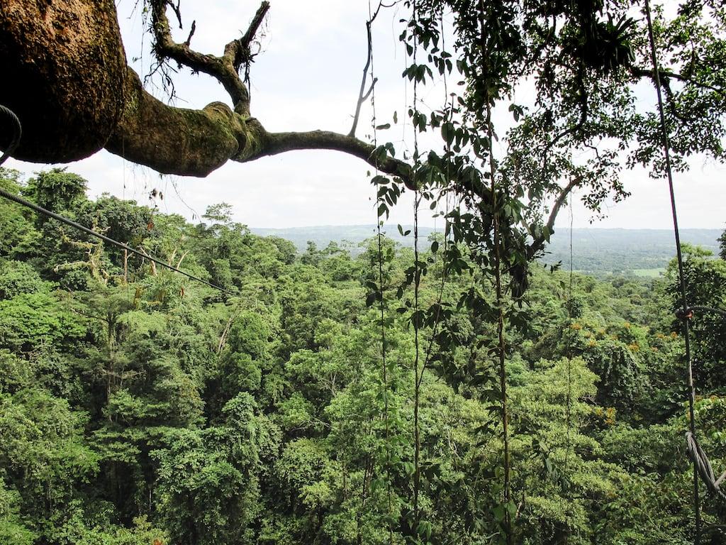 Canopying through La Fortuna, Costa Rica