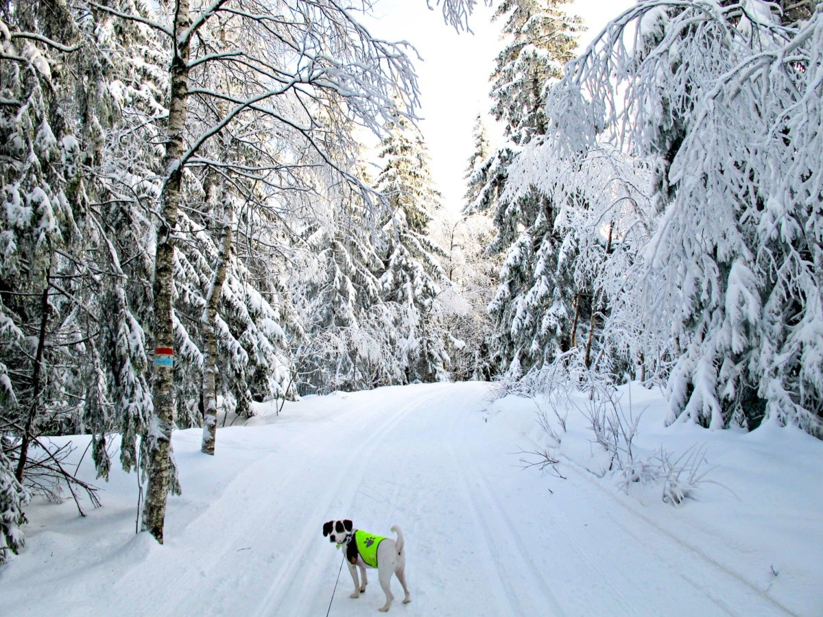 My dog in the snowy forest in Oslo, Norway