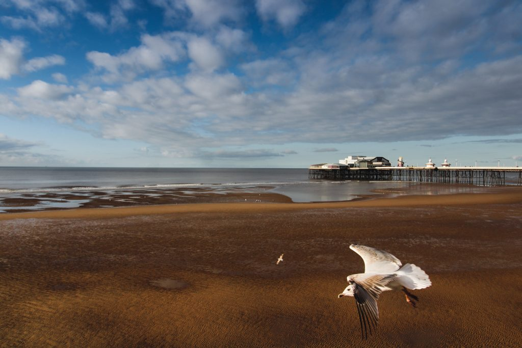Blackpool england seaside promenade pier with a seagull