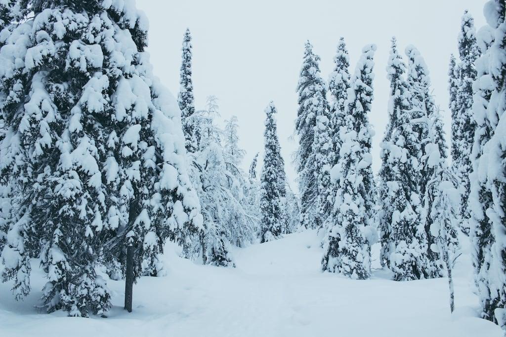 trees and snow at Isokenkäisten Klubi in kuusamo, finland in finnish lapland
