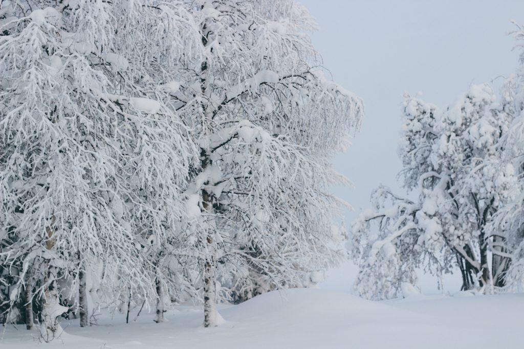 finland wilderness kuusamo trees