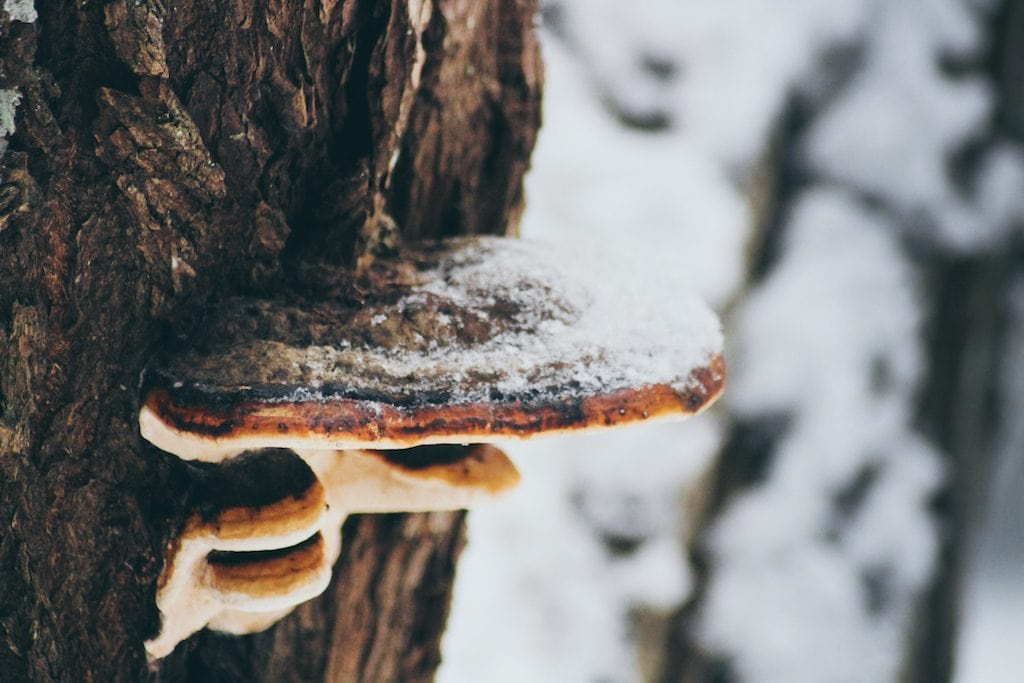 Nuuksio National Park: The Most Beautiful Winter Day Trip From Helsinki mushroom on tree