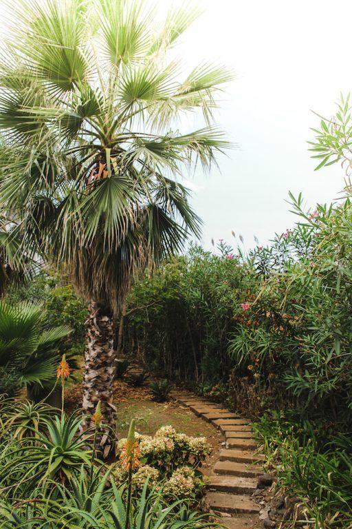 Madeira Hidden Gems: A Complete Travel Guide to Sao Vicente, Madeira palm tree calamar