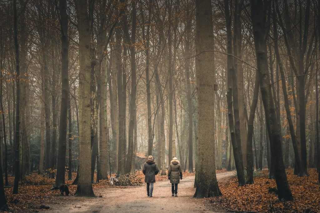 8 alternative things to do in hamburg, germany in winter. forest in hamburg
