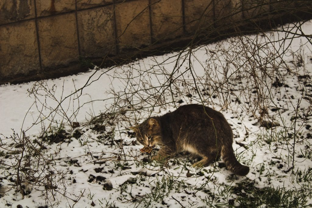 Krivoy Rog, Ukraine: A Travel Guide to a City You Know Nothing About stray cat