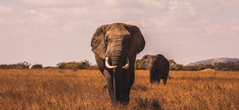 5 Must-Visit Safari Destinations in Africa