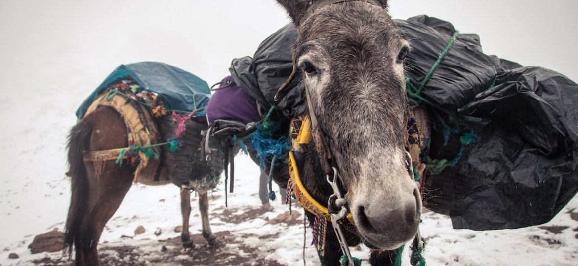 Atlas Mountains Uncovered – What Not To Miss During Your Toubkal Trek donkey