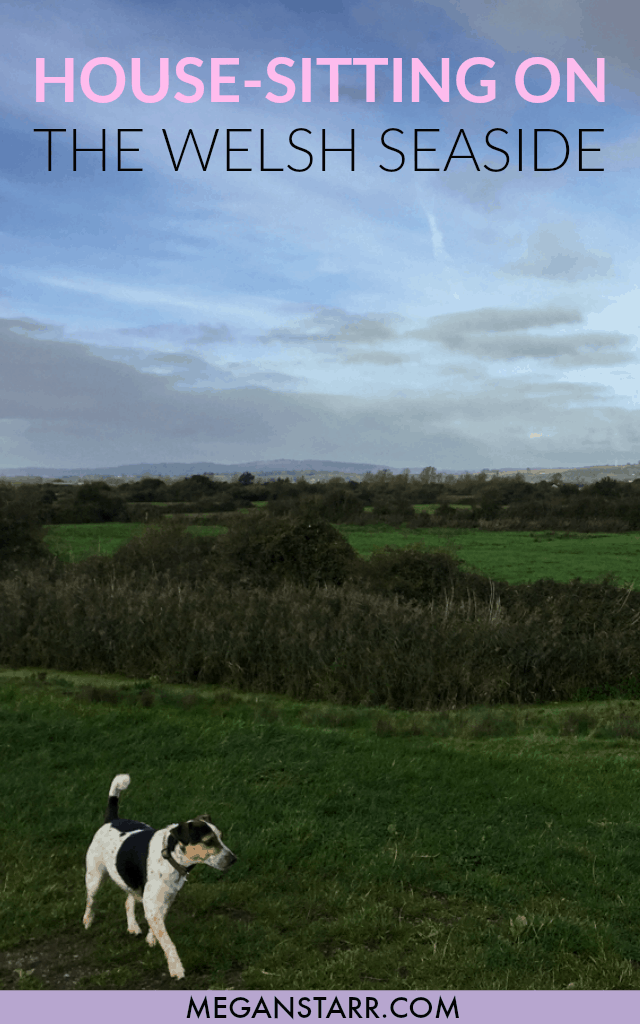 Why House-Sitting in Wales Was One of My Favorite Travel Experiences Ever #wales #housesitting #nomador #dogsitting #unitedkingdom