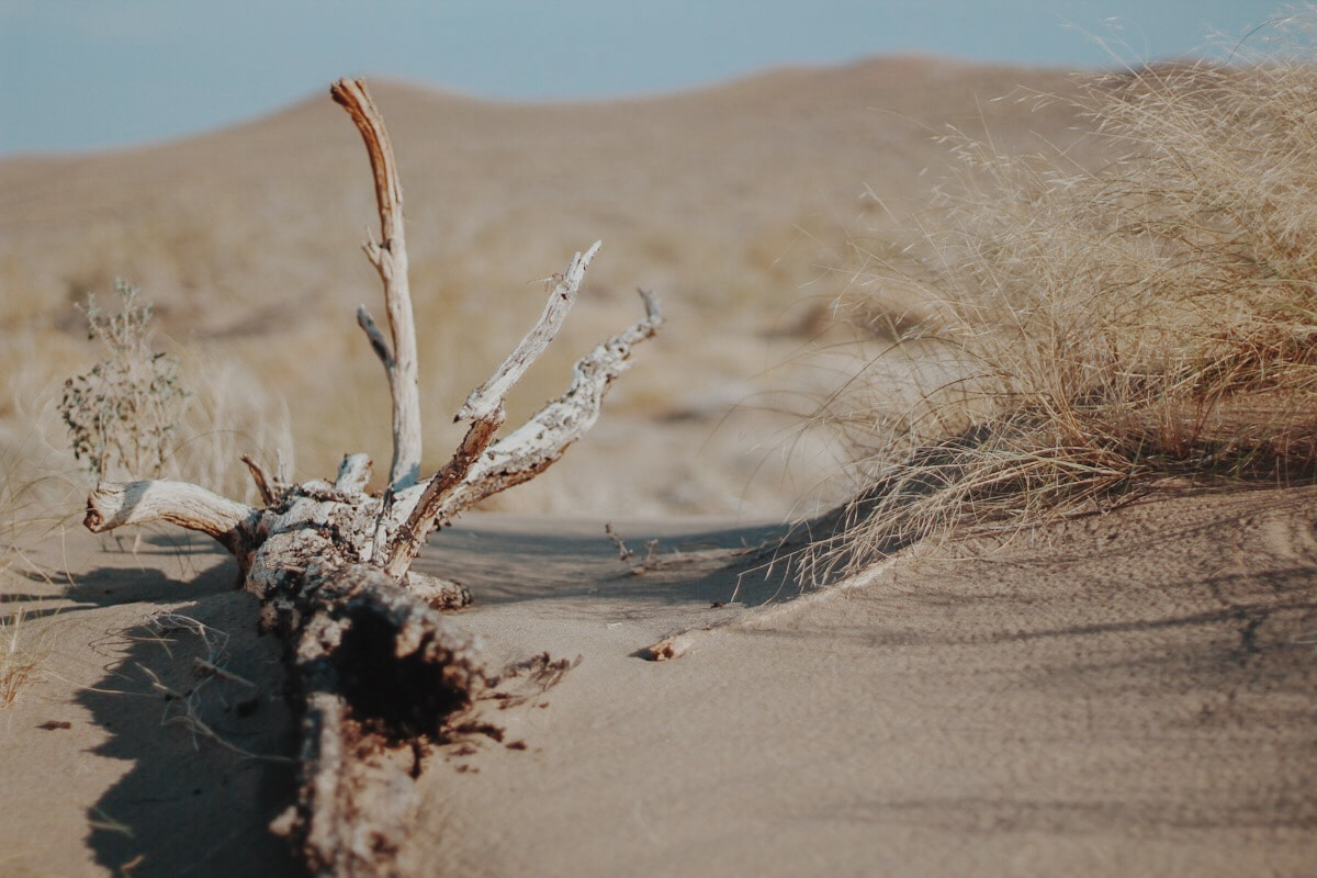 Singing Dunes Altyn Emel National Park Kazakhstan dead tree