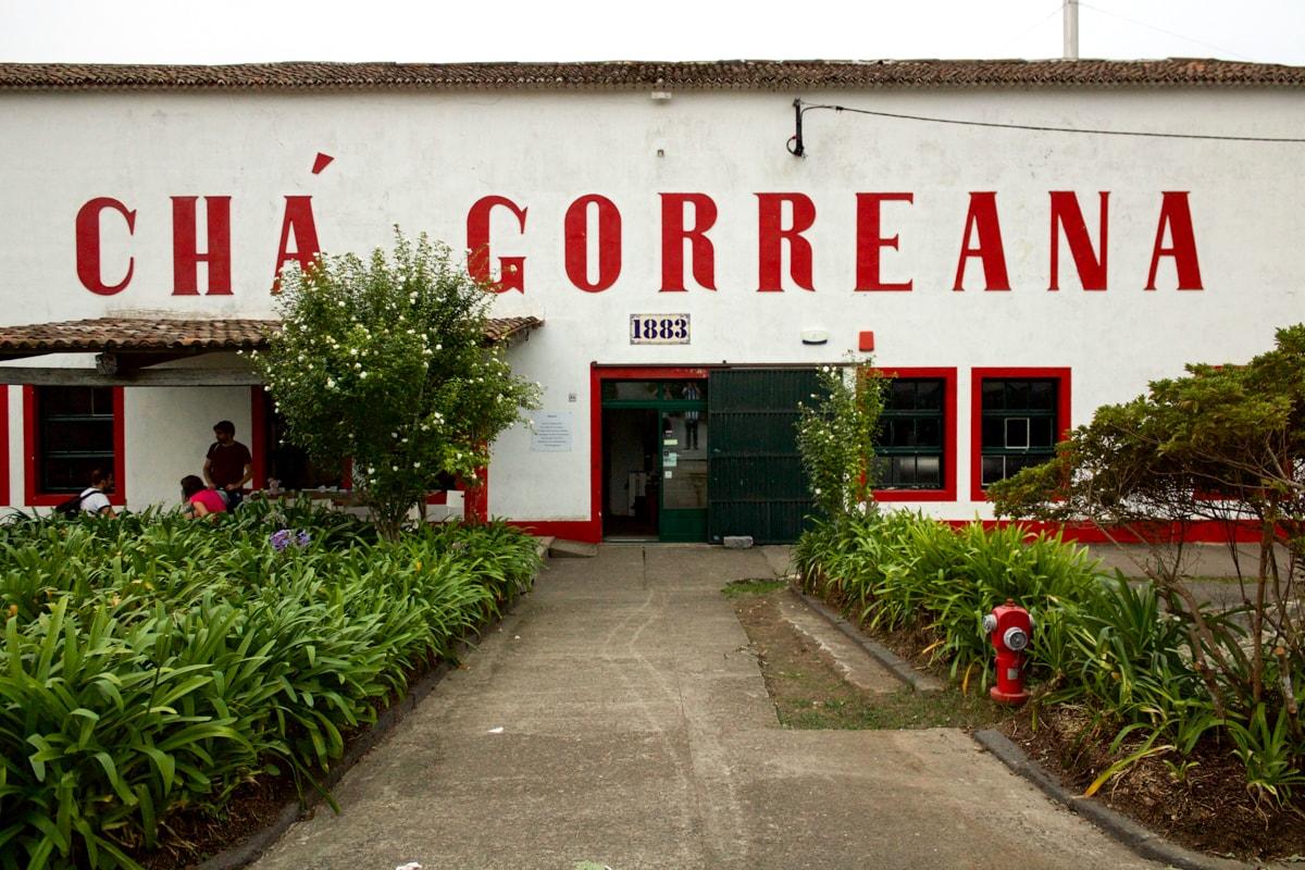 cha gorreana tea plantation in the azores