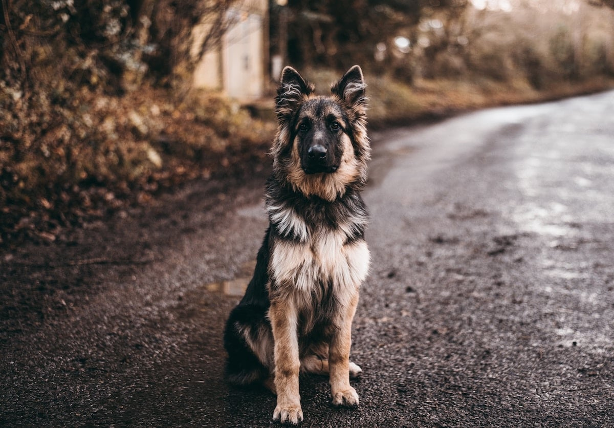 How to Get an Emotional Support Animal in Virginia - Megan Starr