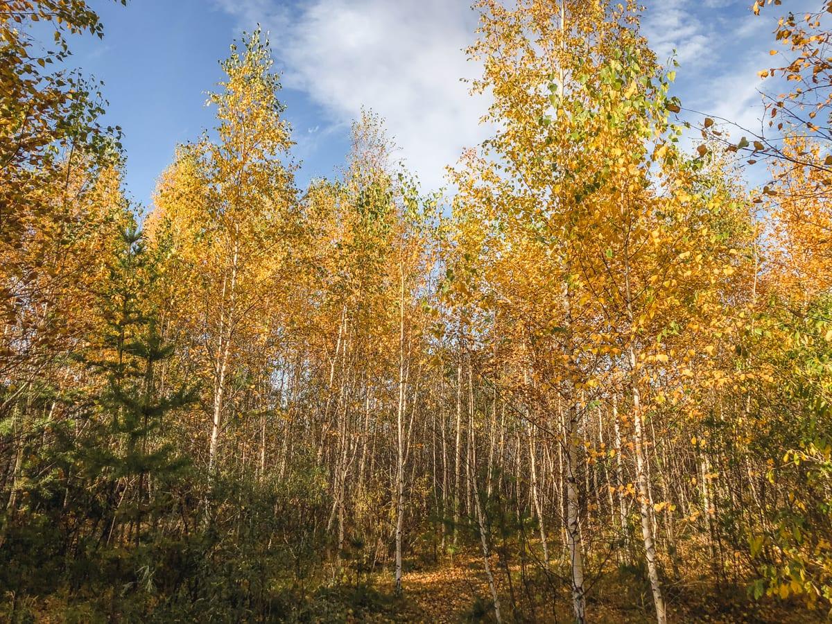 Burabay National Park - Borovoe and Chebache Lakes in Kazakhstan-28