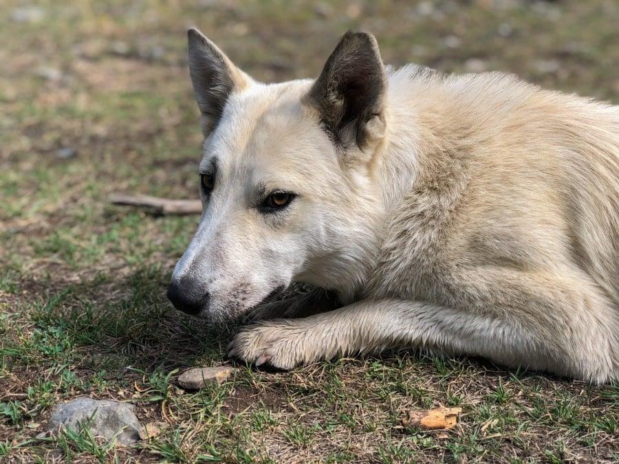 dogs at kaindy lake