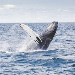BEST WHALE WATCHING TOURS IN THE AZORES
