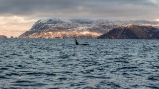 Whale Watching in Tromsø: 4 Ethical Whale Safaris in Tromsø, Norway