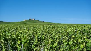 Champagne Tours From Paris: How to Book Your Perfect Champagne Day Trip