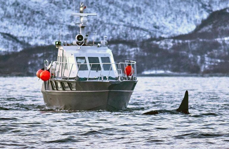tromso whale safari 1