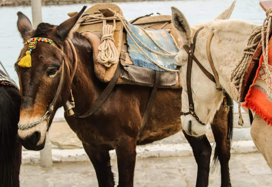 Donkeys on Hydra Greece (things to do in Hydra Island, Greece)-18