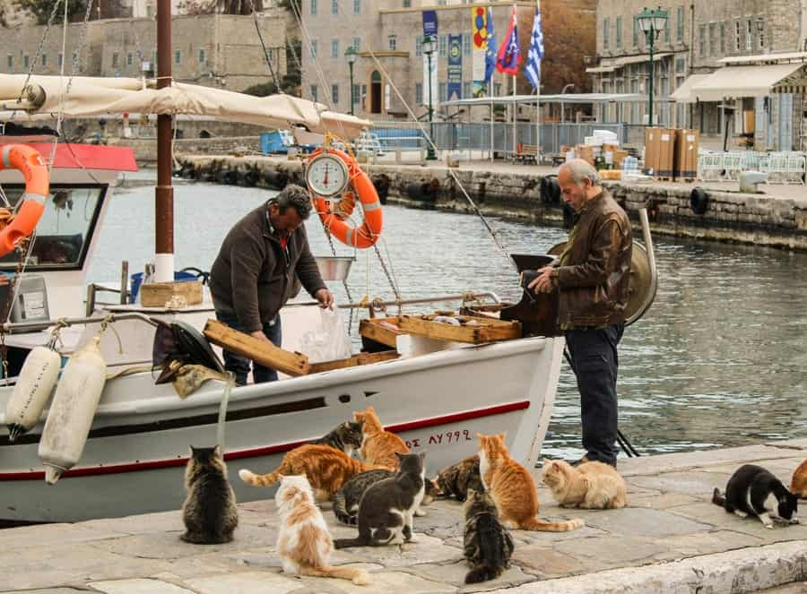 Cats in Hydra Greece (things to do in Hydra Island, Greece)-25