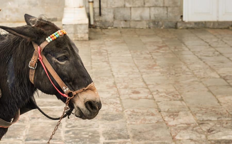 Donkeys on Hydra Greece (things to do in Hydra Island, Greece)-18
