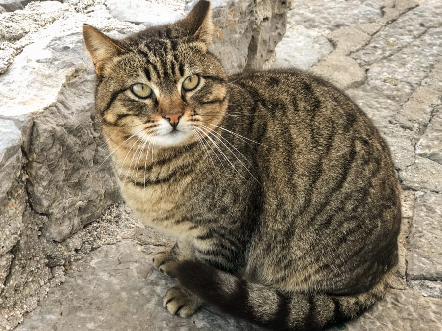 Cats on Hydra Greece (things to do in Hydra Island, Greece)-9