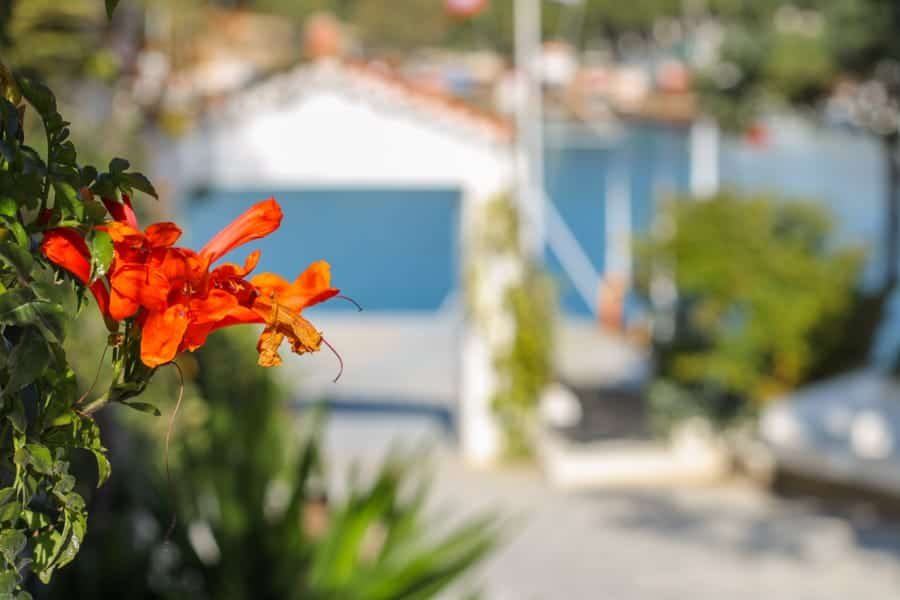 Spetses cafes Greece (things to do in Spetses)-7