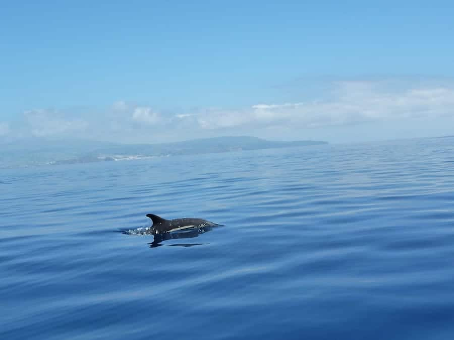azores snorkeling guide