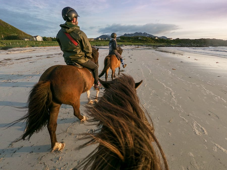 lofoten horseback riding