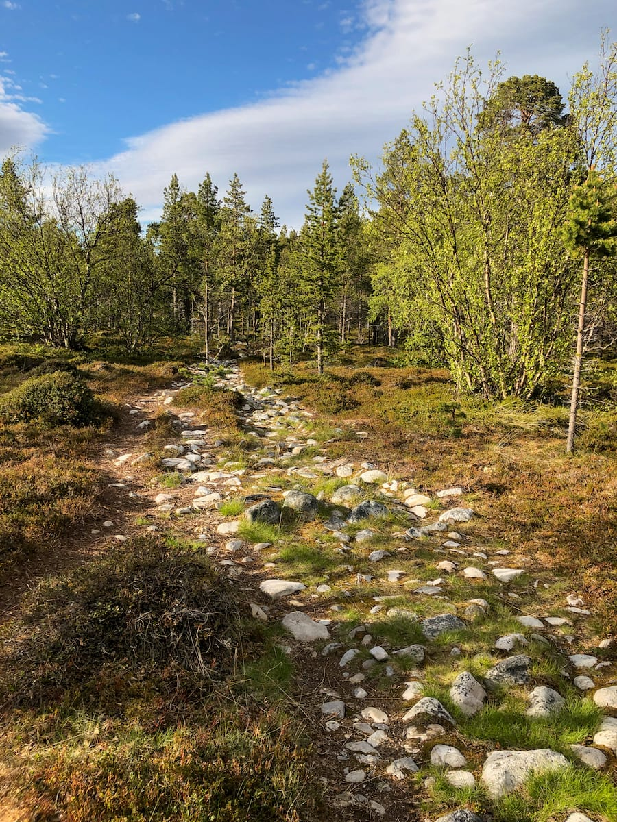 Stabbursdalen National Park in Norway from Honningsvåg and the North Cape-8
