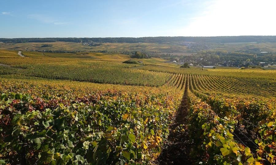 Best Champagne Books (guides and books about Champagne in France)