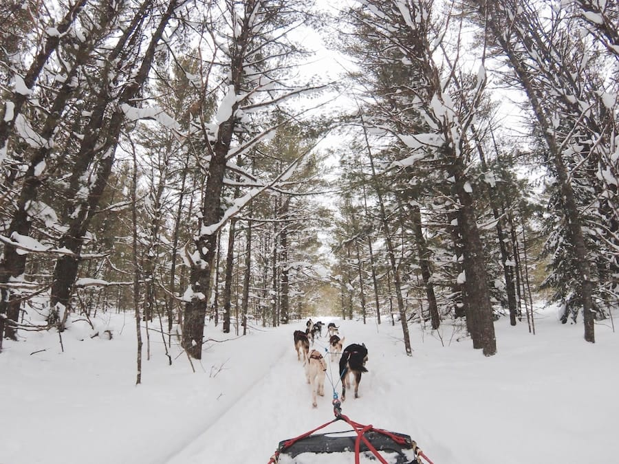 Dog Sledding in Tromsø: What to Expect, Tips, and Husky Safari Tours