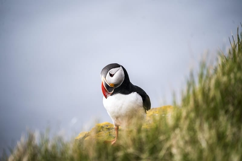 When to see puffins in the Faroe Islands: Travel tips